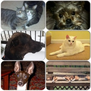 Peters Co. Pets